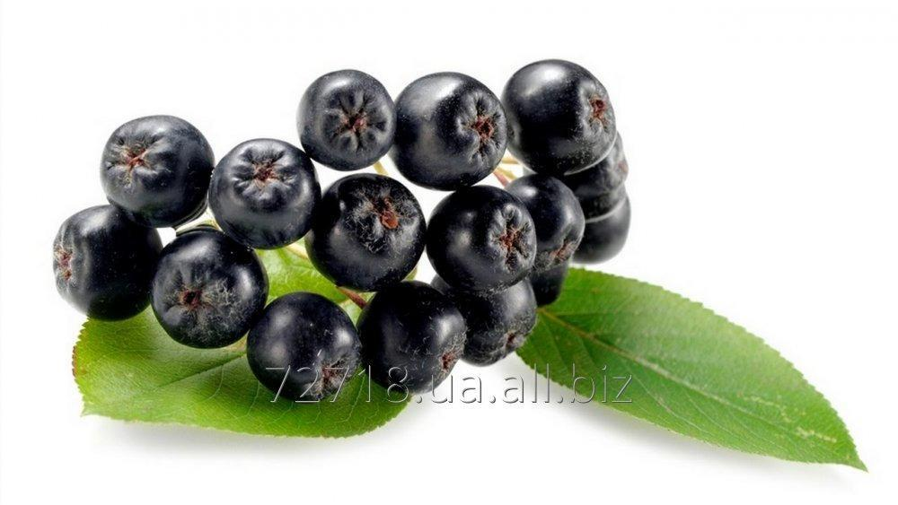 Buy Concentrate of berries of the Black-fruited mountain ash (Aroniya) food powdery