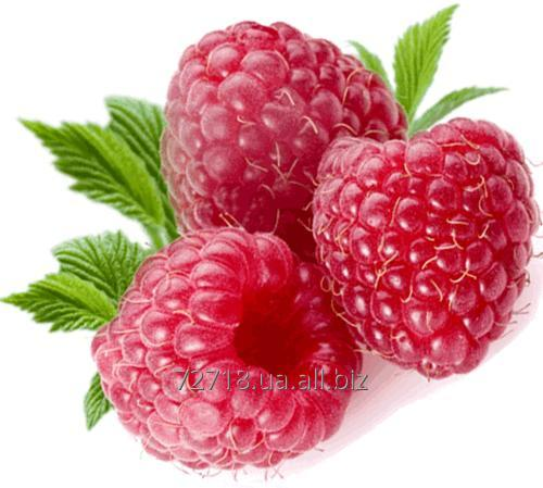 Buy Concentrate of berries of raspberry food powdery