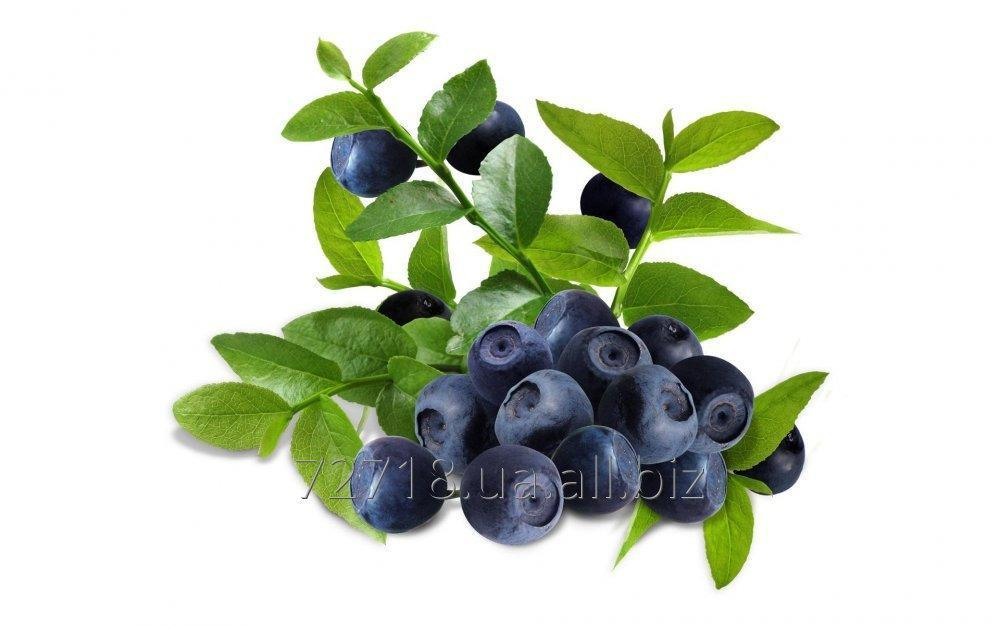 Buy Concentrate of berries of bilberry food powdery