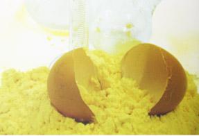 Buy Yolks are dry egg