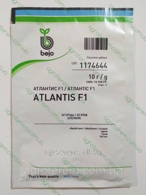 Семена огурца Атлантис (Atlantis) F1 50 гр