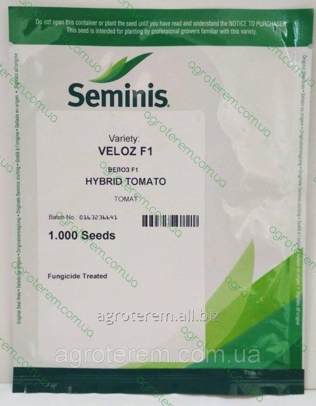 Семена томата Велоз F1 (Veloz F1) 1000 сем