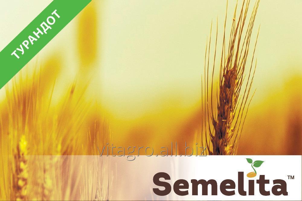 Купити Семена пшеница озимая Турандот
