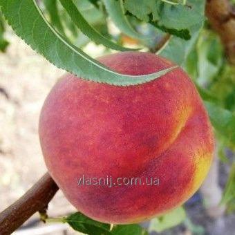 Саджанці персика