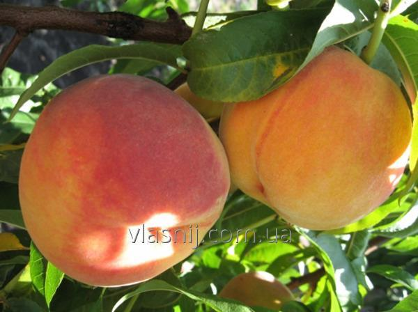Peach Fair Heyven