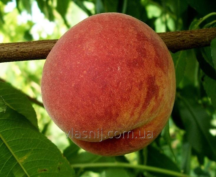 Peach Cross Heyven