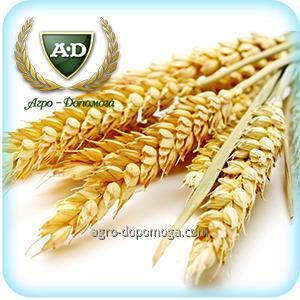 Пшеница озимая Шпаловка