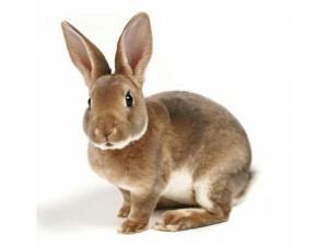 Купить Комбикорм для кроликов с сенной мукой Артикул: F10