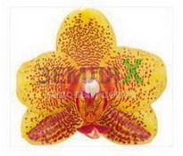 Купить Орхидея Charming (Ø 12 см, h 70 см)