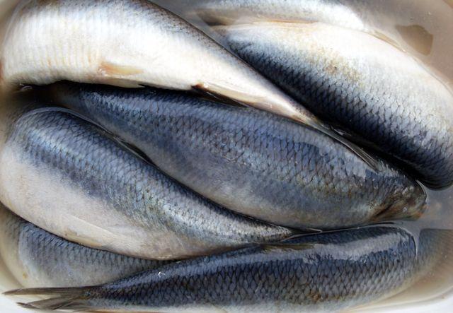 А вот сама по себе рыба означает свободу и независимость.