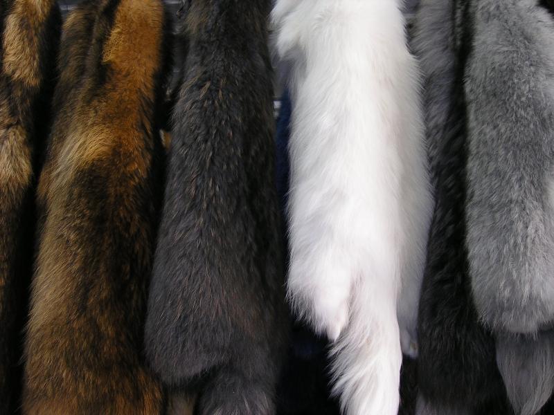 Купить Мех натуральный Енот альбинос