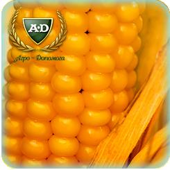 Семена кукурузы ВН63
