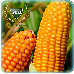 Семена кукурузы ВН6763