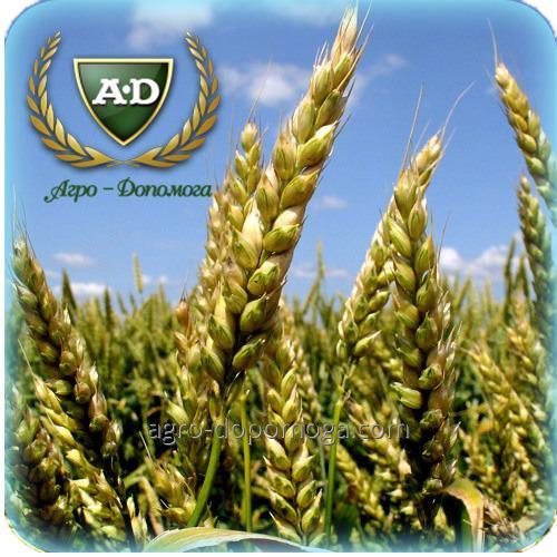 Пшеница озимая Литановка (безостая)