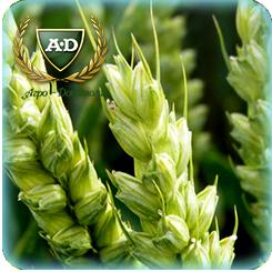 Пшеница озимая мягкая Мулан