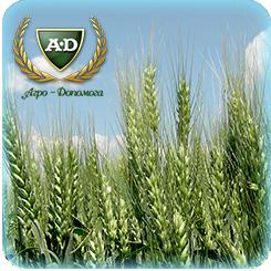 Пшеница озимая мягкая Сотница