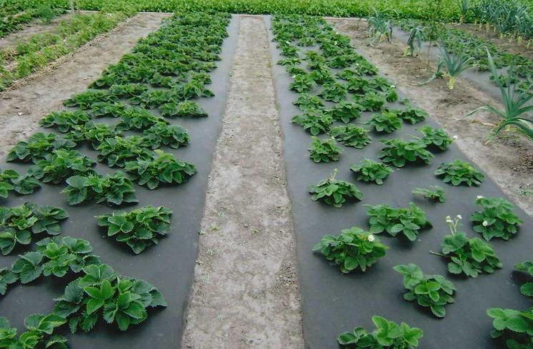 Agrofibra