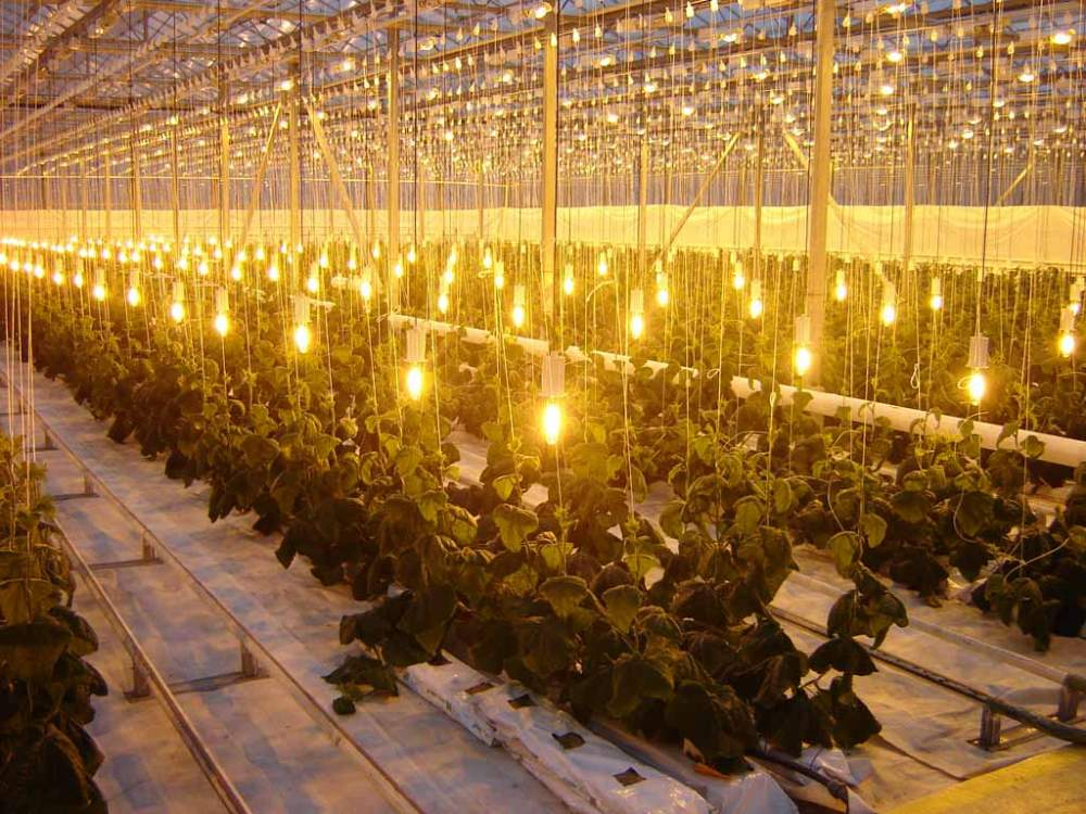 Lighting systems for plants