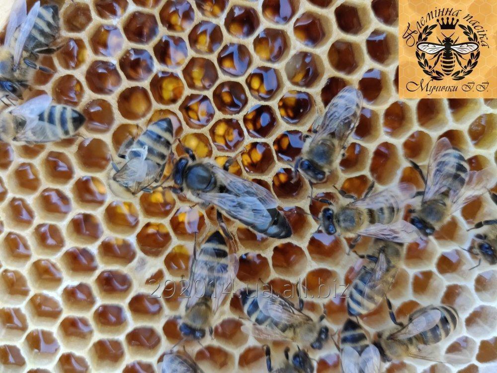 Купить Высококачественные плодные меченые пчеломатки карпатской породы