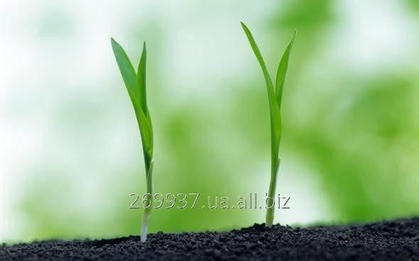 Стимулятор росту Спідфол Аmino Flover &amp- Fruit (Аміно цвітіння та плодоношення), SC, 5 л  (замовляти від 5 л)