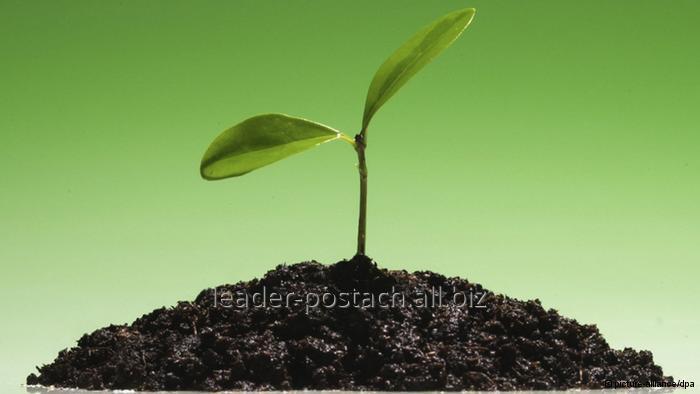 Купить Известняк для раскисления почв и водоемов