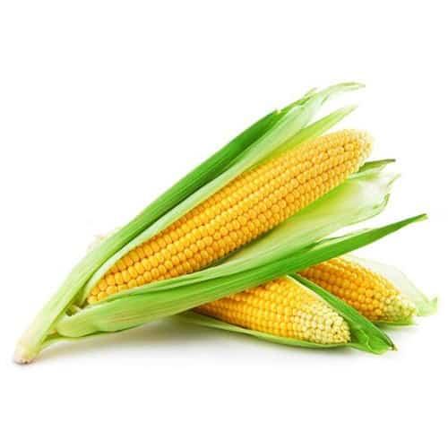 Інокулянт для силосування кукурудзи 11ЦФТ/ 11СFT