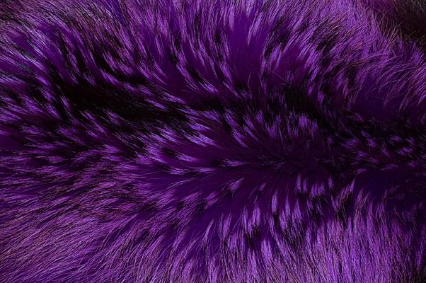 Buy Fur Raccoon Cardinal