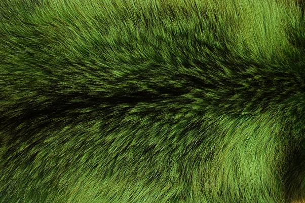 Buy Fur Raccoon Malachite