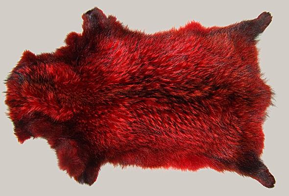 Buy Fur Raccoon Coral