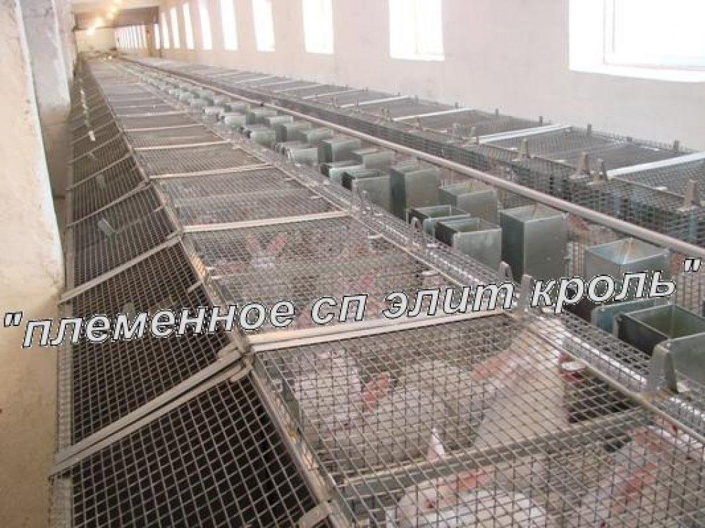 Клетки маточные кролей, оборудование для кролиководства