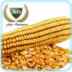 Семена кукурузы Варта МВ