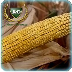 Семена кукурузы Донор МВ