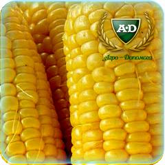 Семена кукурузы Плевен