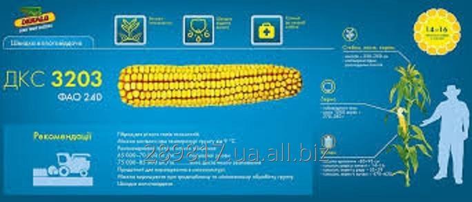 Купить Семена кукурузы ДКС 3203