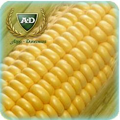 Семена кукурузы Соколов 407 МВ