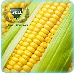 Семена кукурузы Ривьера (посевной материал кукурузы)