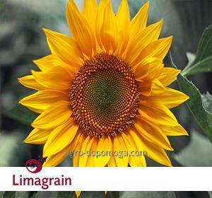 Семена подсолнечника ЛГ 5671 КЛП (LG5671 CLP)