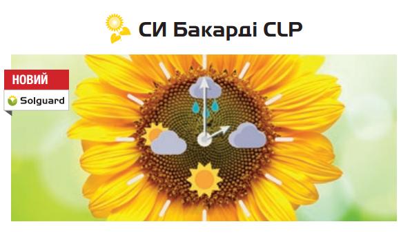 Семена подсолнечника СИ Бакарді CLP