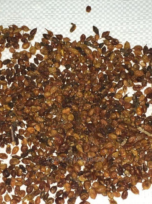 Купить Облепиха ботаническая сухая Hippophae rhamnoides Rokitnik