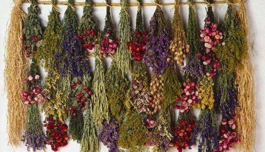 Купити Лікарські рослини