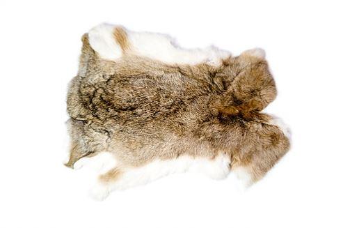 Шкура кролика