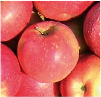 Саженцы яблони Релинда