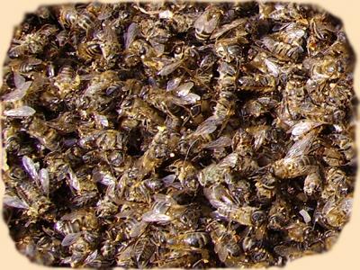 Купить Пчелиный подмор