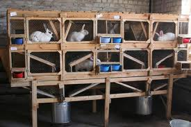 Buy Cages for rabbits