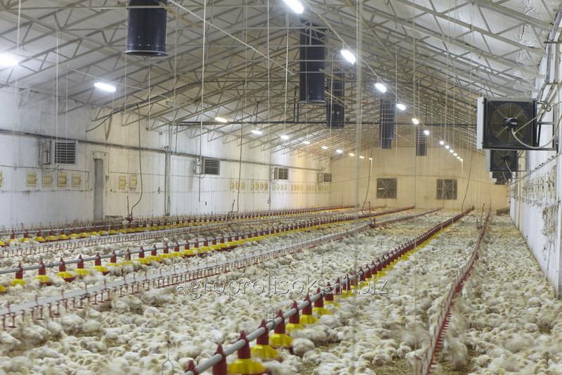 Agregaty dla hodowli zwierząt oraz drobiu