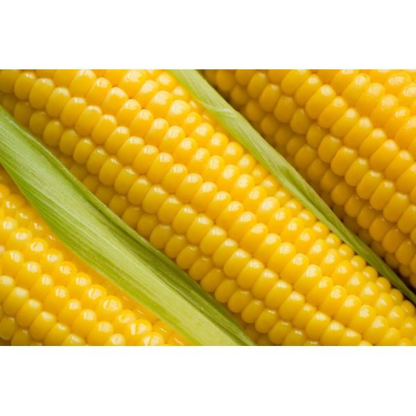 Купить Семена кукурузы Муасон Экстра