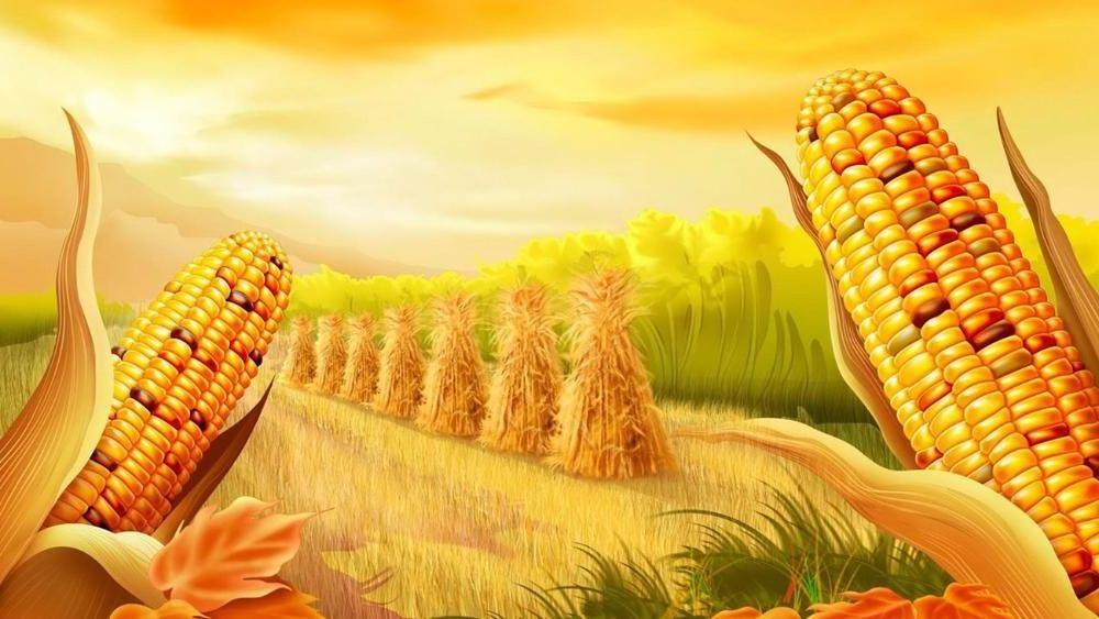 Купить Семена кукурузы Монблан Стандарт