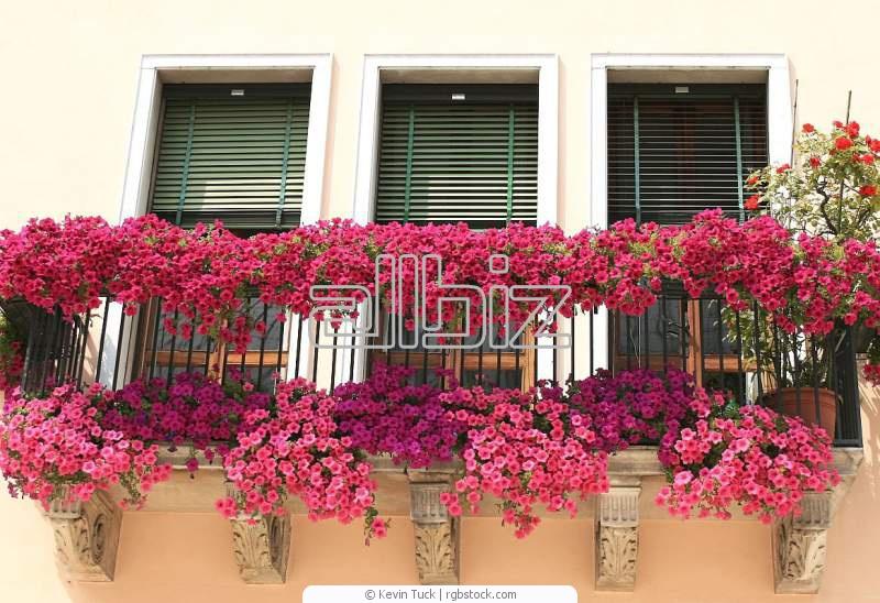 Balkon cicek fideleri - балконные цветы - balkon cicek fidel.