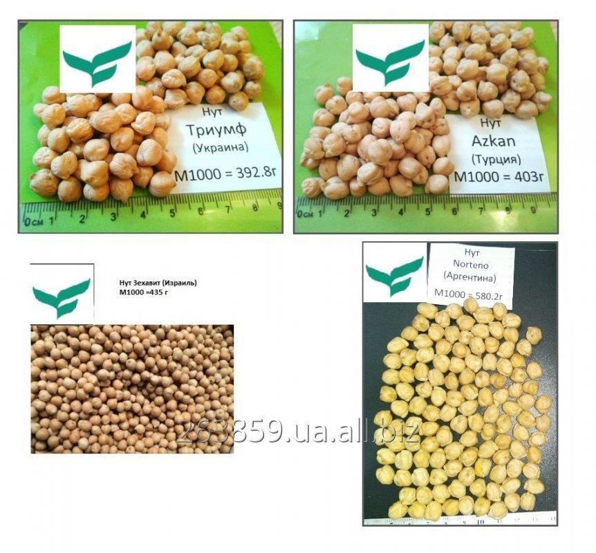 Buy Seeds chick-pea