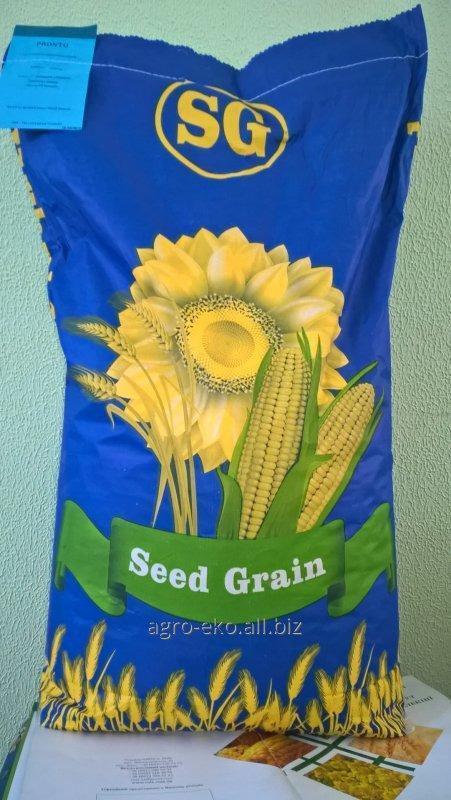 Buy Seeds of sunflower of Pronto Seed Grain
